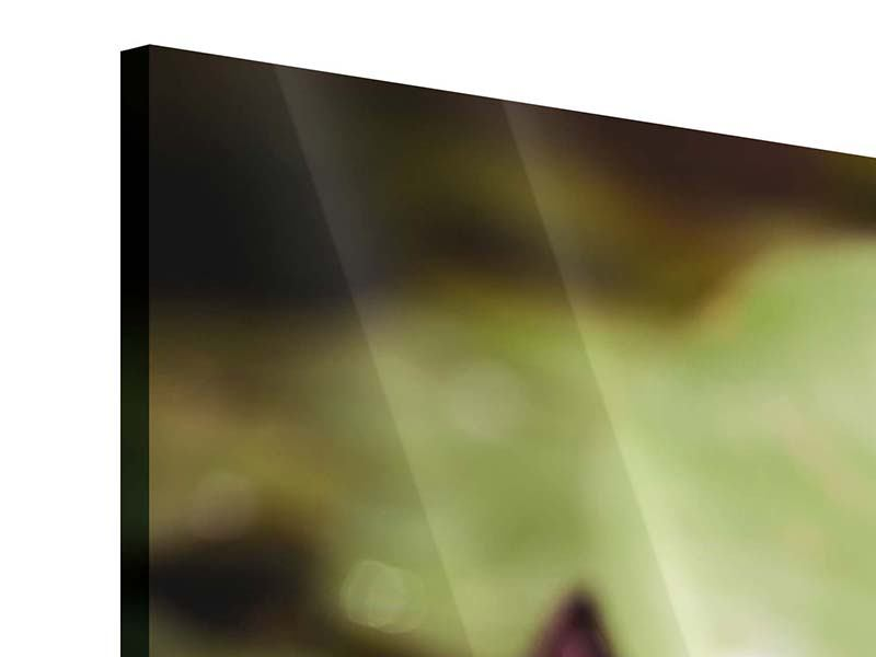 Acrylglasbild 3-teilig modern Seerosen bei Sonnenaufgang