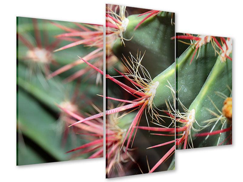 Acrylglasbild 3-teilig modern Die Kaktusblüte