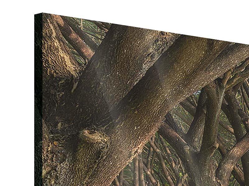 Acrylglasbild 3-teilig modern Alter Baumbestand