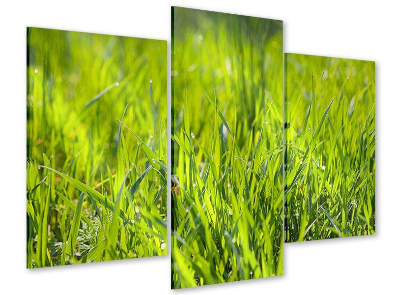 Acrylglasbild 3-teilig modern Gras im Morgentau