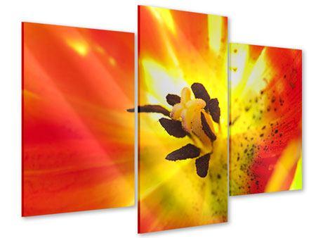Acrylglasbild 3-teilig modern Die Narbe einer Tulpe XXL