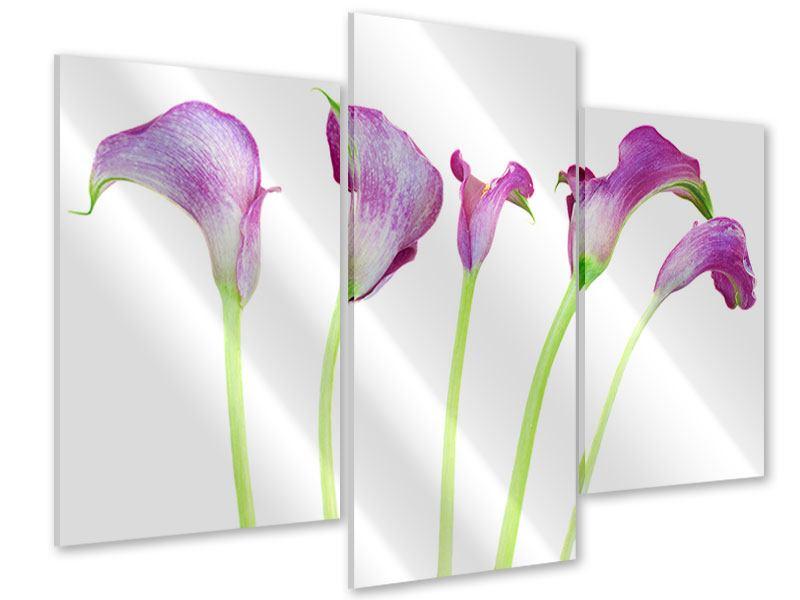 Acrylglasbild 3-teilig modern Callas in Lila