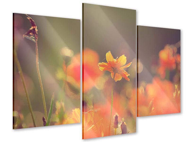 Acrylglasbild 3-teilig modern Blütenpracht