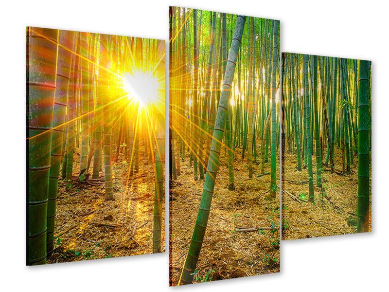 Acrylglasbild 3-teilig modern Bambusse