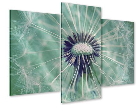 Acrylglasbild 3-teilig modern Close Up Pusteblume