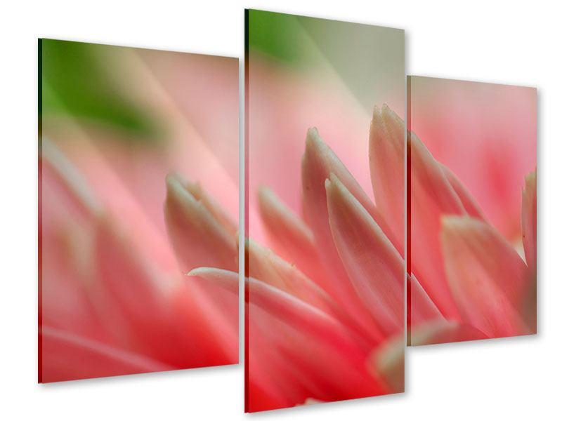 Acrylglasbild 3-teilig modern Close Up einer Blüte