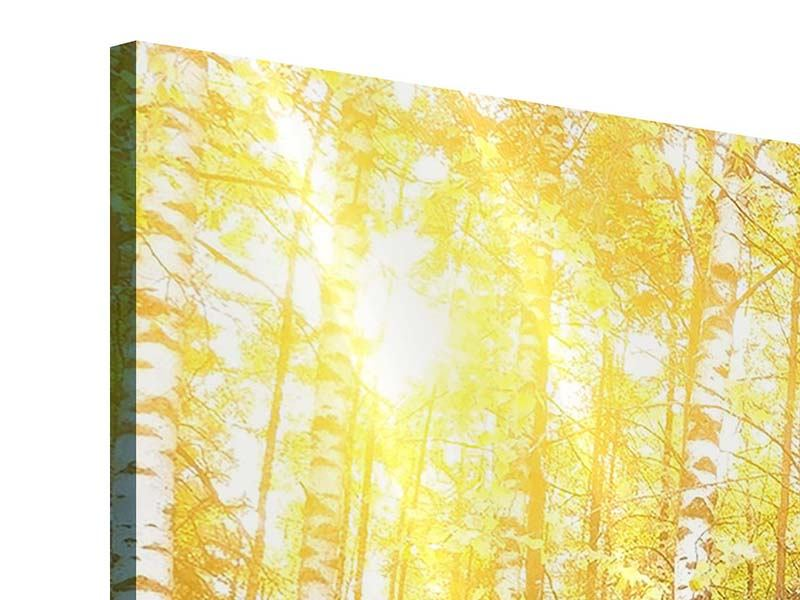 Acrylglasbild 3-teilig modern Birkenwald