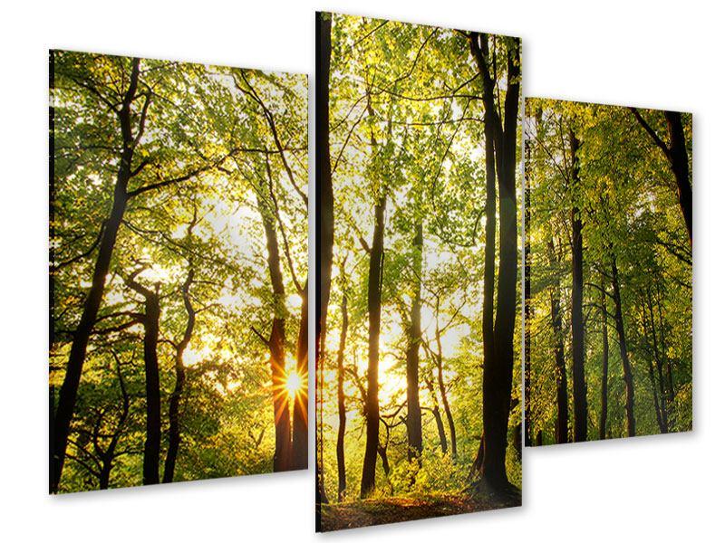 Acrylglasbild 3-teilig modern Sonnenuntergang zwischen den Bäumen