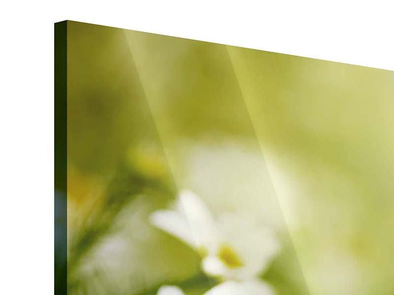 Acrylglasbild 3-teilig modern Die Gänseblümchen