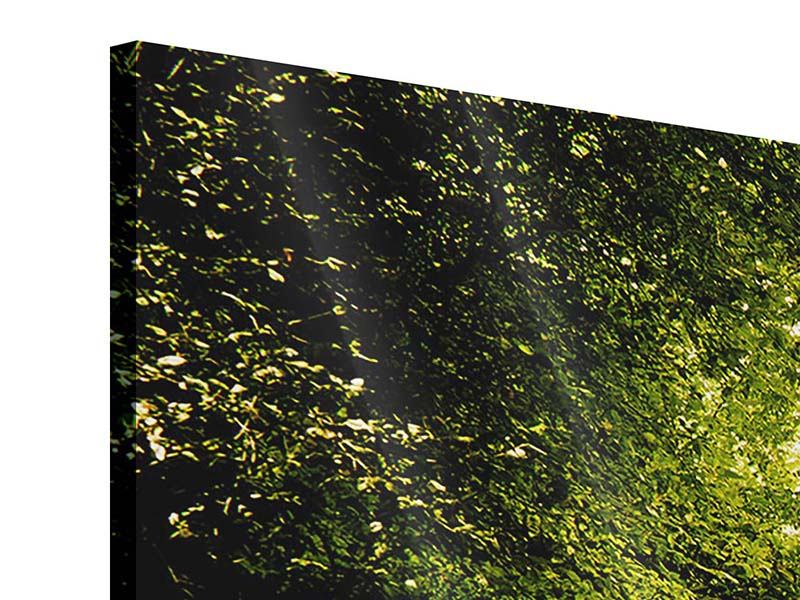 Acrylglasbild 3-teilig modern Der bemooste Weg