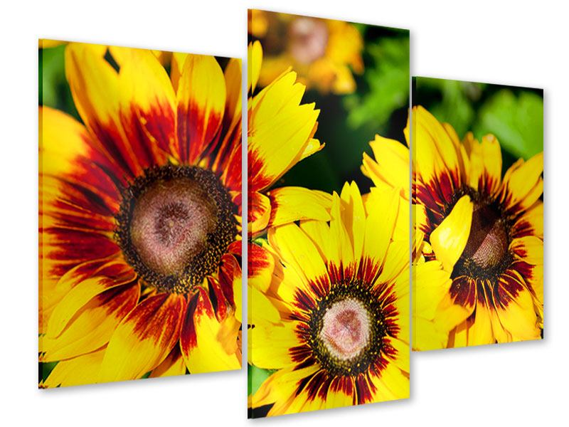 Acrylglasbild 3-teilig modern Reife Sonnenblumen