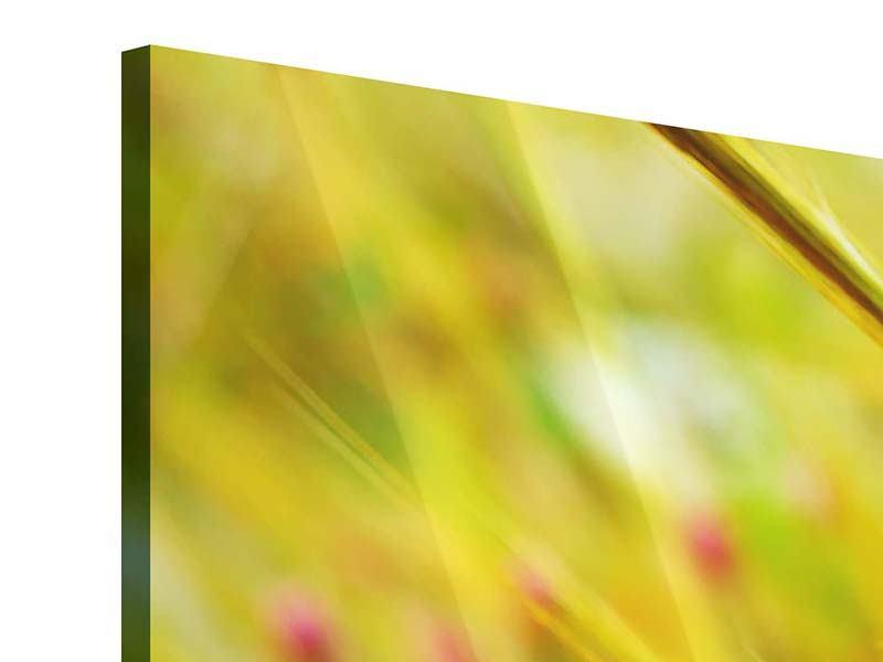 Acrylglasbild 3-teilig modern Das Weizenfeld