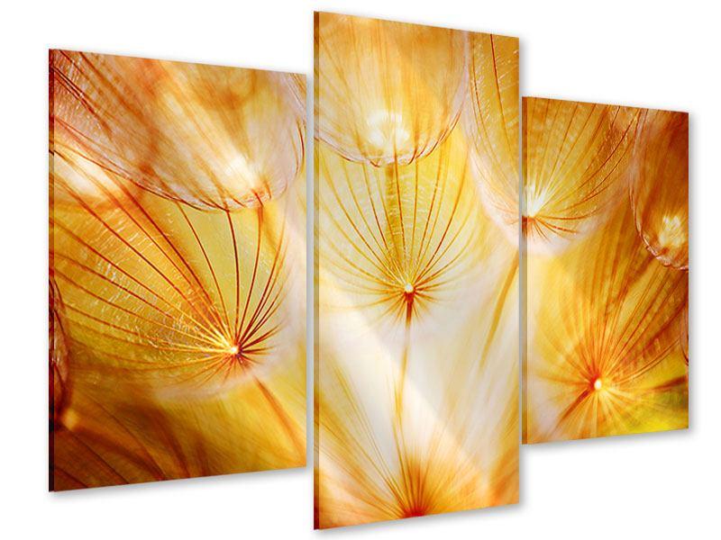 Acrylglasbild 3-teilig modern Close Up Pusteblume im Licht