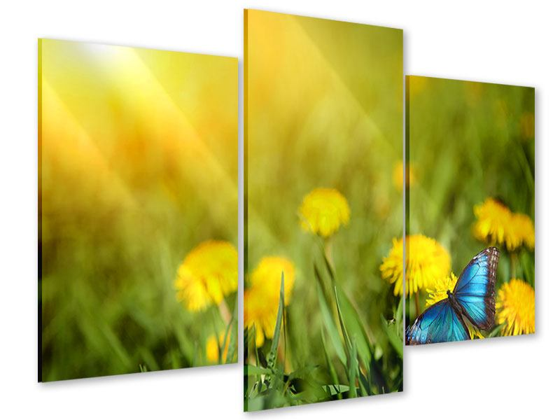 Acrylglasbild 3-teilig modern Der Löwenzahn und der Schmetterling