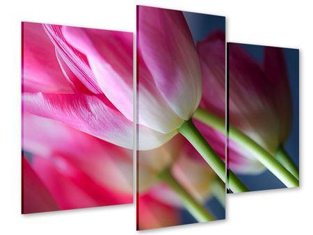 Acrylglasbild 3-teilig modern Makro Tulpen