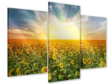 Acrylglasbild 3-teilig modern Ein Feld voller Sonnenblumen