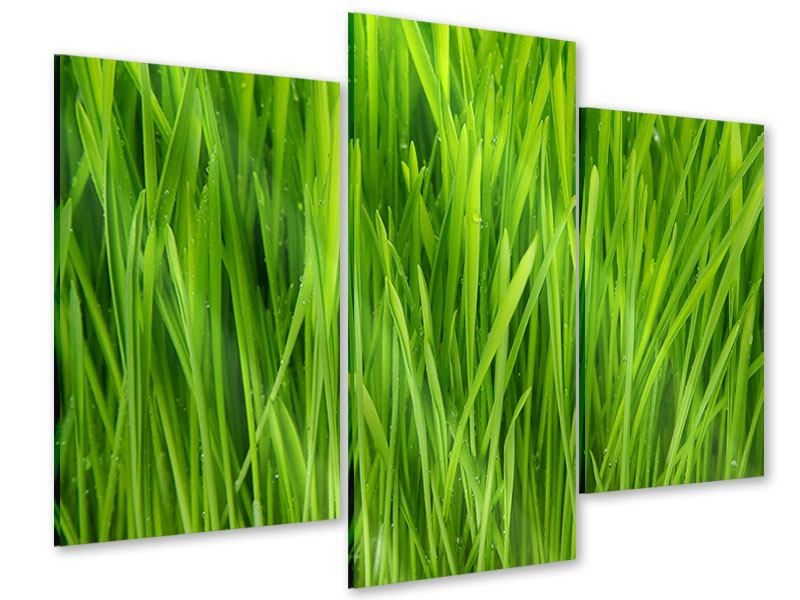 Acrylglasbild 3-teilig modern Grashalme im Morgentau