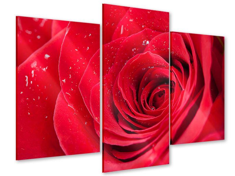 Acrylglasbild 3-teilig modern Rote Rose im Morgentau