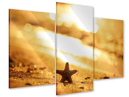 Acrylglasbild 3-teilig modern Der Seestern