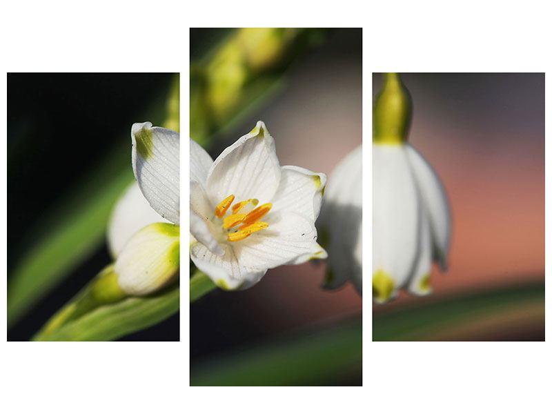 Acrylglasbild 3-teilig modern Schneeglöckchen XXL