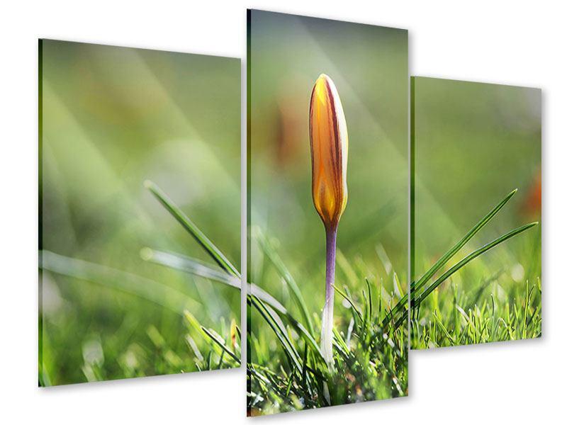 Acrylglasbild 3-teilig modern Die Blütenknospe
