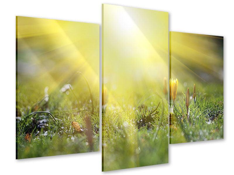 Acrylglasbild 3-teilig modern Blumige Wiese