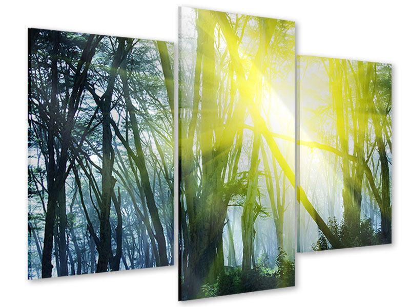 Acrylglasbild 3-teilig modern Sonnenstrahlen im Wald