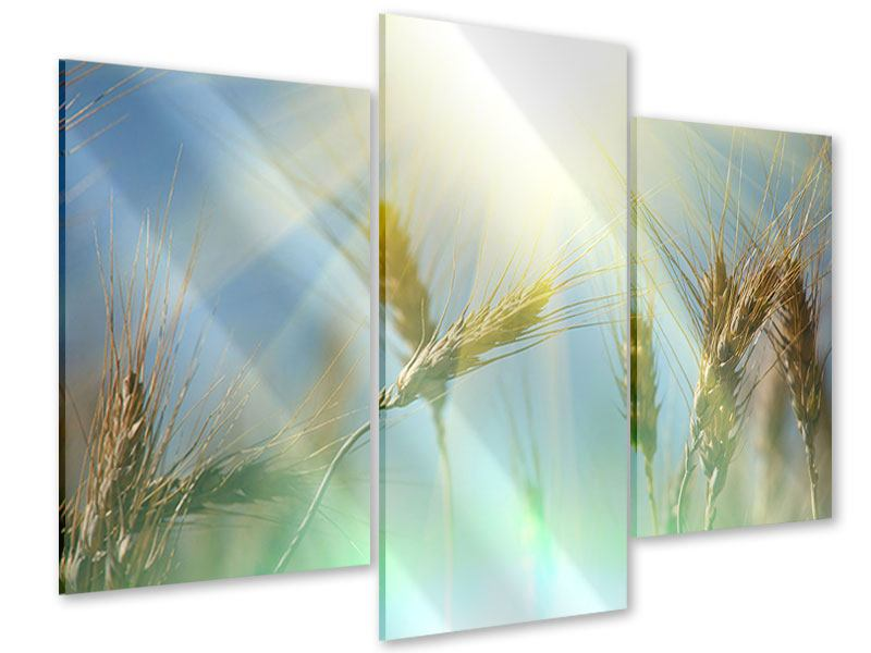 Acrylglasbild 3-teilig modern König des Getreides