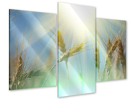Modern 3 Piece Acrylic Print King Of Cereals