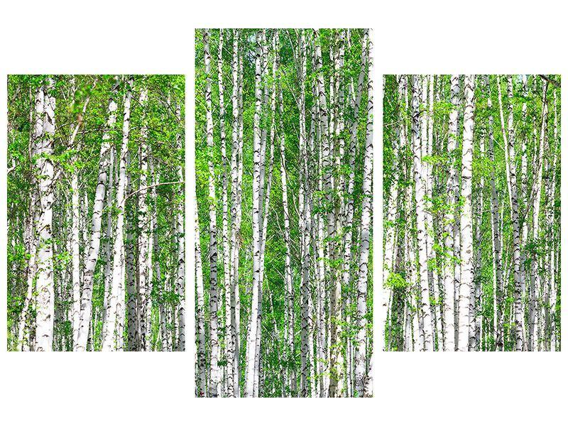 Acrylglasbild 3-teilig modern Der Birkenwald