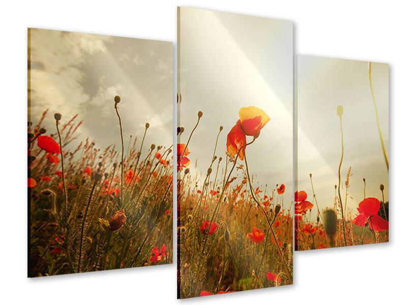 Acrylglasbild 3-teilig modern Das Mohnfeld bei Sonnenaufgang