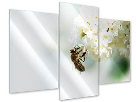 Acrylglasbild 3-teilig modern Die Hummel und die Blüte