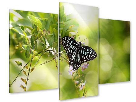 Acrylglasbild 3-teilig modern Papilio Schmetterling XXL