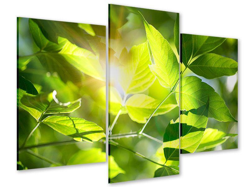 Acrylglasbild 3-teilig modern Es grünt so grün