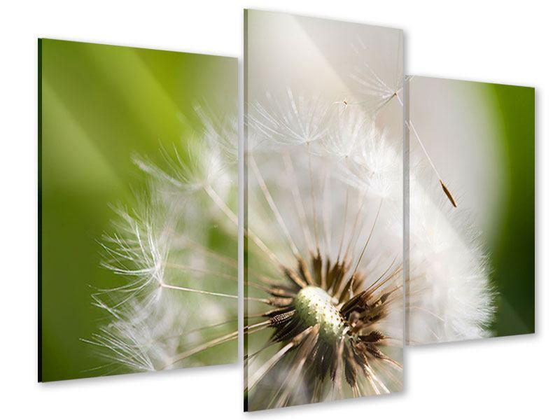 Acrylglasbild 3-teilig modern Pusteblume Löwenzahn