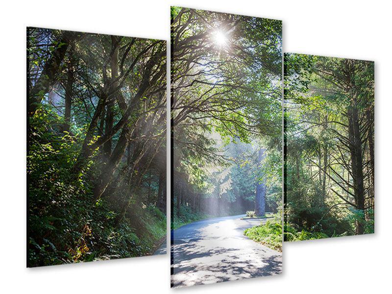 Acrylglasbild 3-teilig modern Sonniger Waldweg