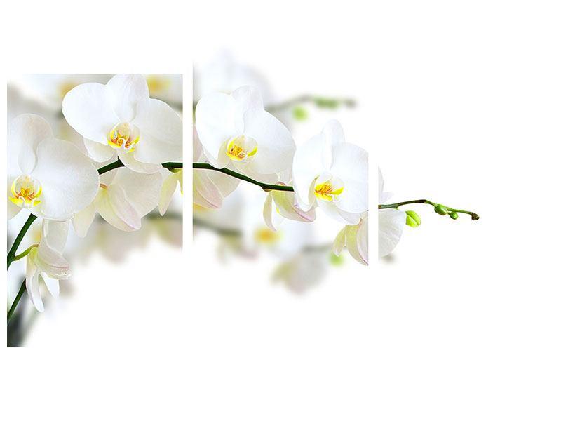 Acrylglasbild 3-teilig modern Weisse Orchideen