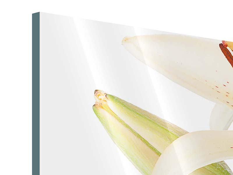 Acrylglasbild 3-teilig modern Weisser Lilienstrauch