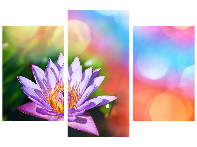 Acrylglasbild 3-teilig modern Colored Lotus