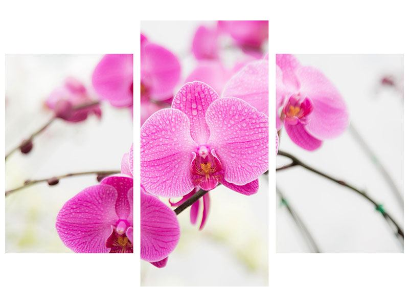 Acrylglasbild 3-teilig modern Das Symbol der Orchidee