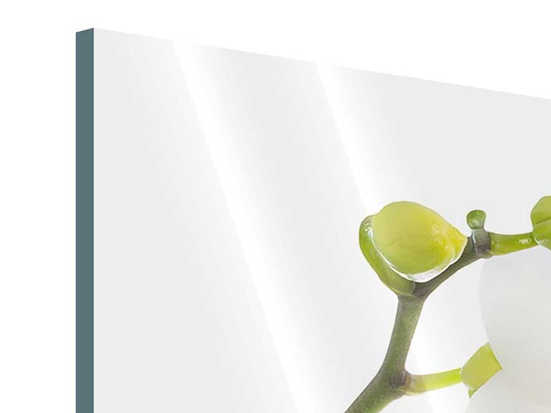 Acrylglasbild 3-teilig modern Orchideenliebe