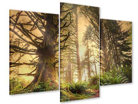 Acrylglasbild 3-teilig modern Sonnenuntergang im Dschungel