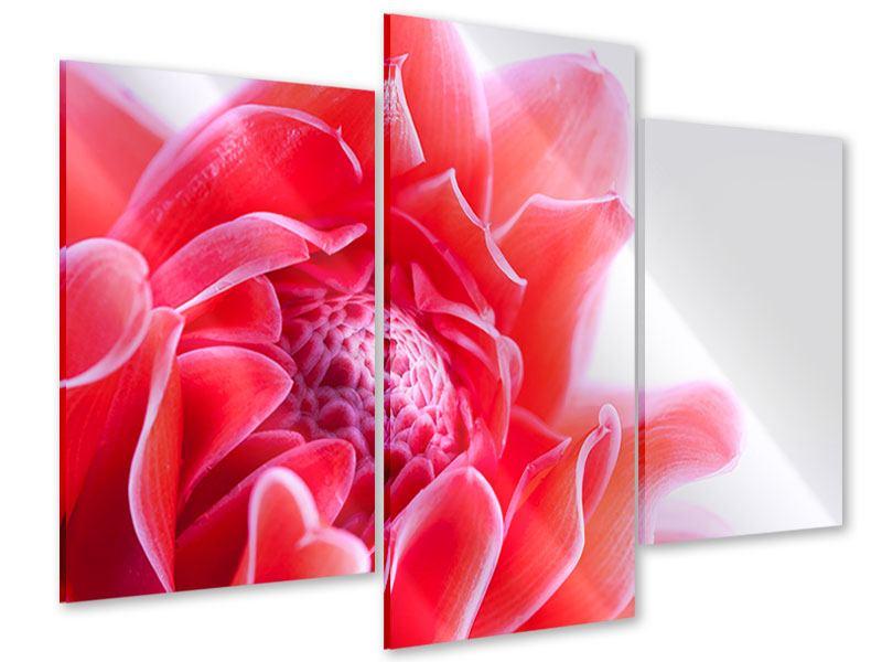 Acrylglasbild 3-teilig modern Etlingera XXL