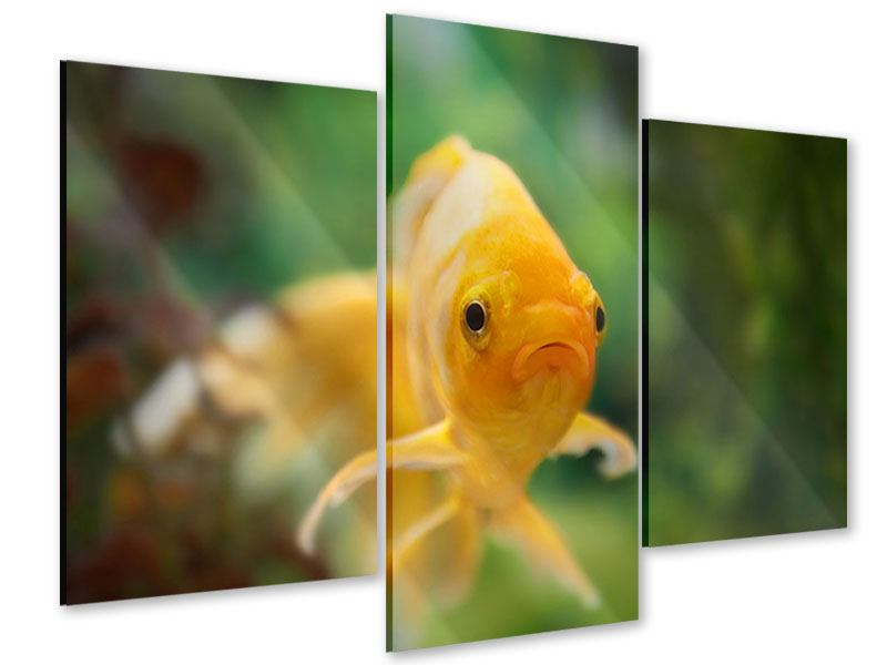 Acrylglasbild 3-teilig modern Der Fisch