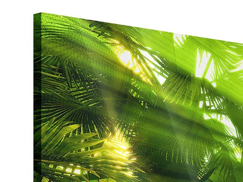Acrylglasbild 3-teilig modern Sonnenaufgang im Regenwald