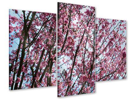 Acrylglasbild 3-teilig modern Japanische Blütenkirsche