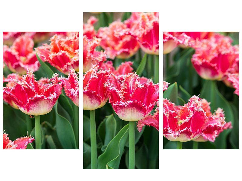 Acrylglasbild 3-teilig modern Die Tulpenwiese