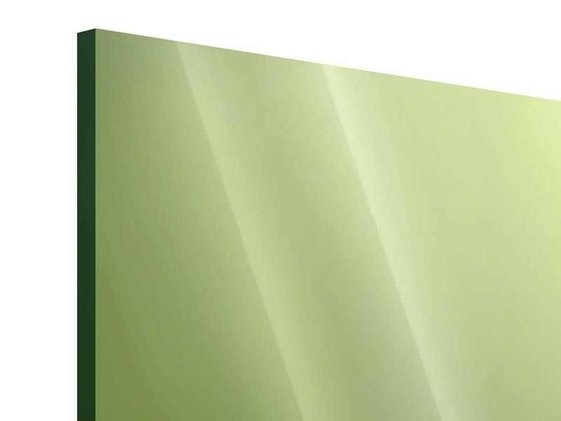 Acrylglasbild 3-teilig modern Pusteblume XL im Morgentau