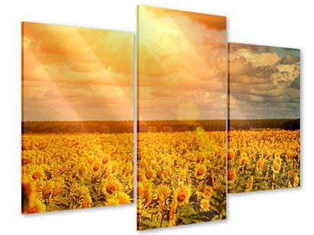Acrylglasbild 3-teilig modern Goldenes Licht für Sonnenblumen