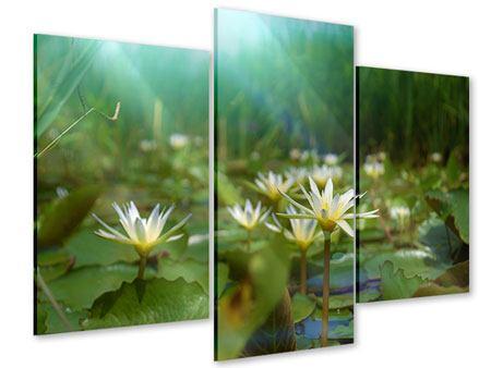 Acrylglasbild 3-teilig modern Im Seerosenteich